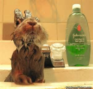 getting a bath bunny pictures
