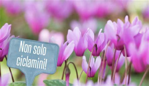 fiori invernali foto fiori invernali tutti i consigli di giardinaggio per un