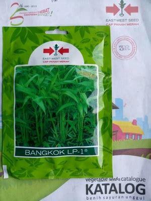 Jual Benih Kangkung Bangkok jual benih kangkung daun lebar bangkok 1500 biji dadi makmur