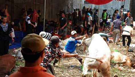 Cacing Sleman sapi di yogyakarta banyak menderita cacing hati