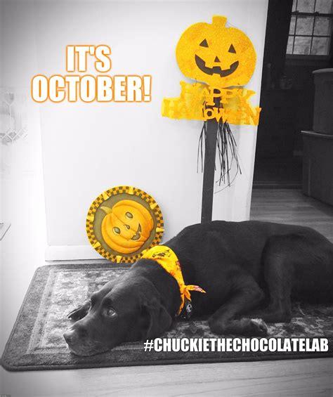 October Memes - it s october imgflip