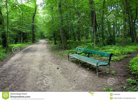 bench road green forest with a bench on the road royalty free stock