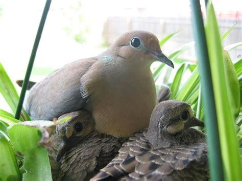 what do wild birds eat quora