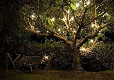 outdoor tree lights let there be light pinterest