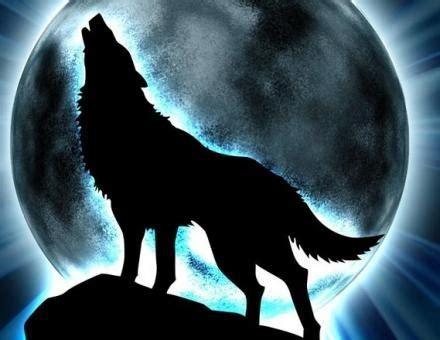 imagenes de lobos chidas imagenes de lobos chidas imagui