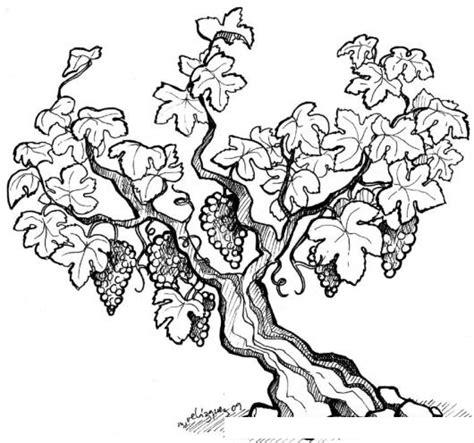 imagenes de uvas en dibujo vinedo dibujo de arbol de uvas para pintar y colorear