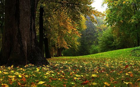 beautiful com beautiful forest wallpapers wallpaper cave