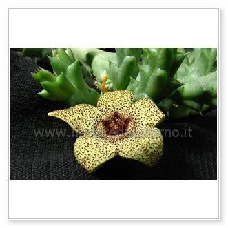 piante grasse in vaso piante grasse in vaso fioriere da esterno vasi fioriere