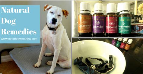 essential oils for calming dogs can i use shoo on my cat cats