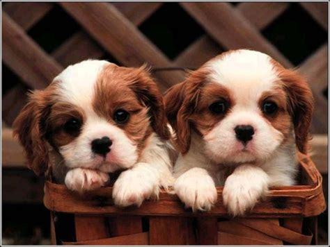 pictures of baby dogs baby dogs photos pet photos gallery lk2lezo3ey