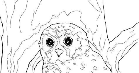 elf owl coloring pages elf owl coloring page 1080p