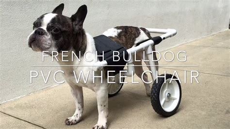 how to make a boat r for dogs diy french bulldog pvc dog wheelchair youtube