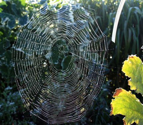 toile d araign 233 e au jardin
