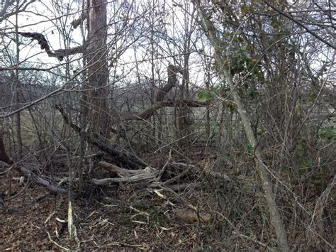 bushwackers land clearing   afterbushwackers land clearing