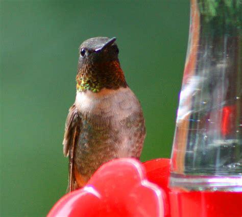 vickie henderson art 2012 hummingbird festival knoxville tn