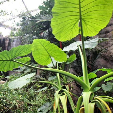 zoologischer garten gutschein zoo regenwald zoo leipzig pflanzen und tiere