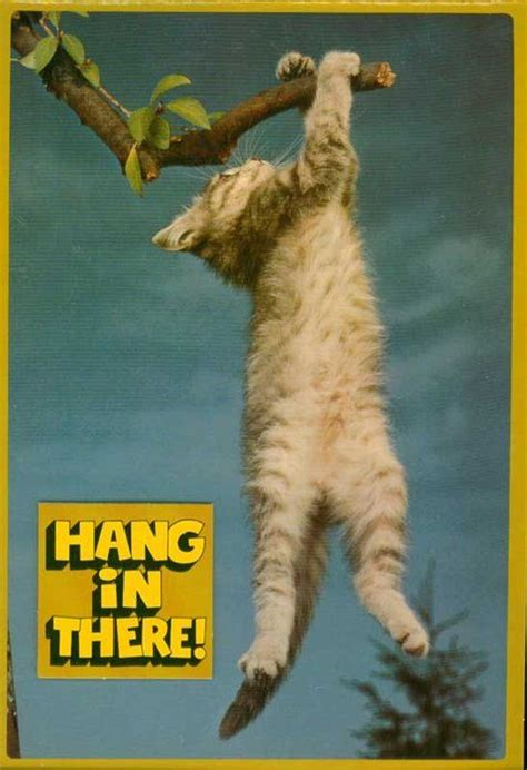 Hang In There Cat Meme - hang in there
