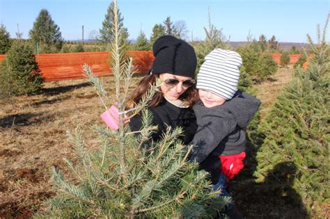 favorite cut your own christmas tree farms in new york