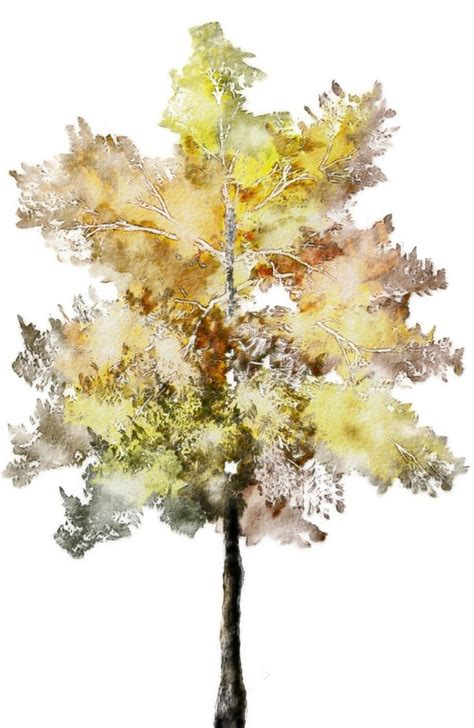 water color tree 40 best images about trees in watercolor on
