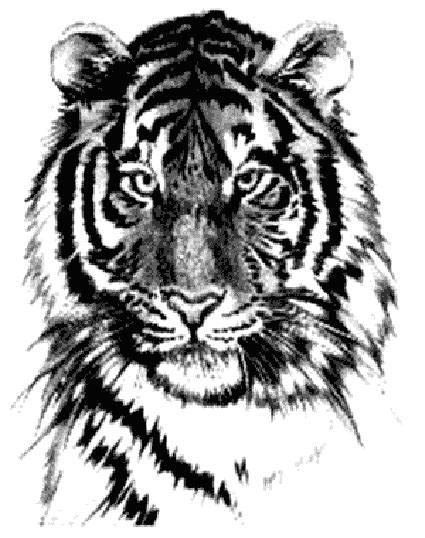 tattoos tiger and lion tattoo stencils