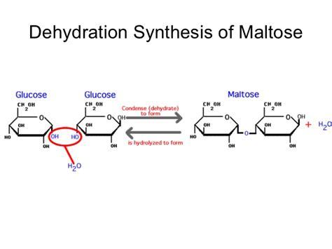 dehydration synthesis biology chp 2 hydrolysis and dehydration synthesis