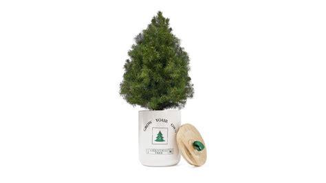grow your own xmas tree kit oprah s favorite things 2018 list grow your own tree kit