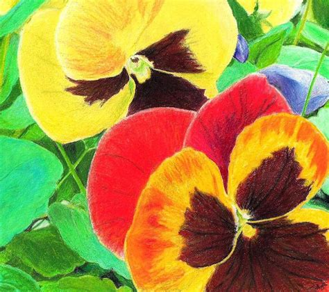 flowers in colored pencil colored pencil flowers google search color pencil colored pencils pencil art