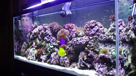 saltwater aquarium 55 gallon setup 55 gallon reef