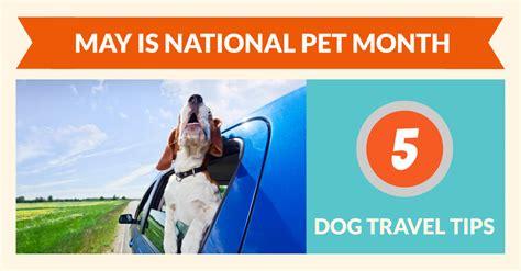 national pet month dog travel tips