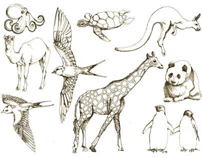Jam Geneva Tribal animal drawings on behance