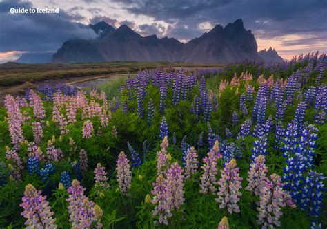 best places to visit in iceland top 10 places to visit in east iceland guide to iceland