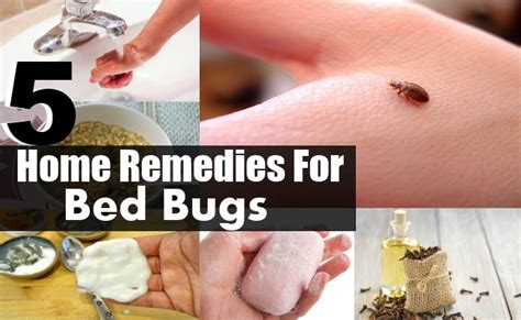 home remedy for bed bug bites 5 top home remedies for bed bugs diy health remedy