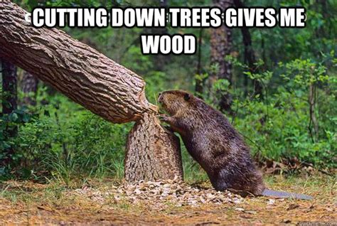 Tree Meme - beaver cutting trees memes quickmeme