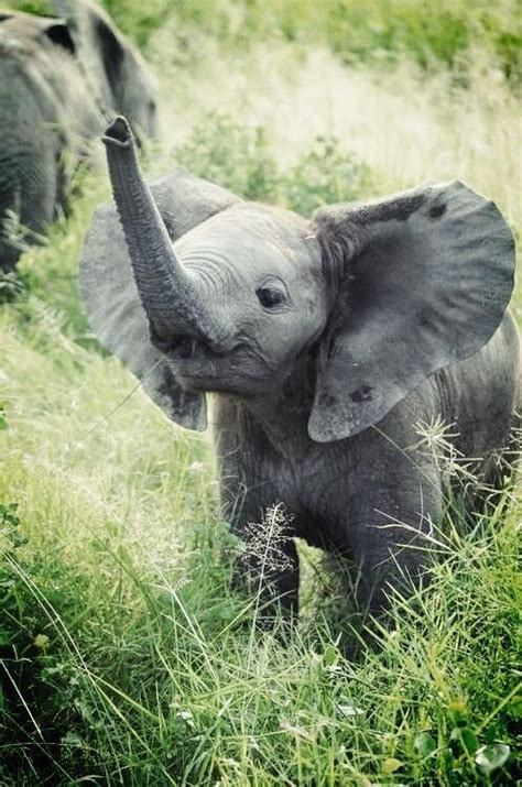 baby elephant cute baby animals baby elephant animals