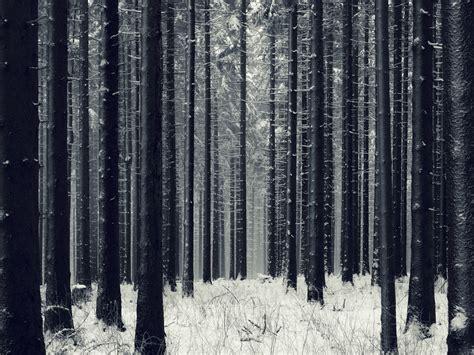 dark woods wallpapers hd  pixelstalknet