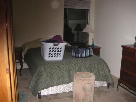 keeping litter box in bedroom what does an apartment with 4 pets look like thecatsite