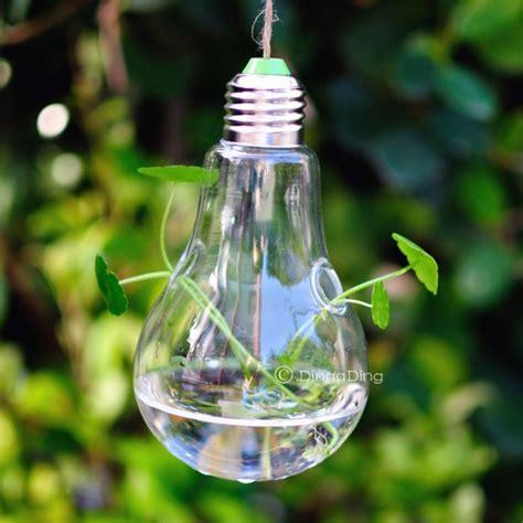 light bulb glass hanging vase air plant succulent