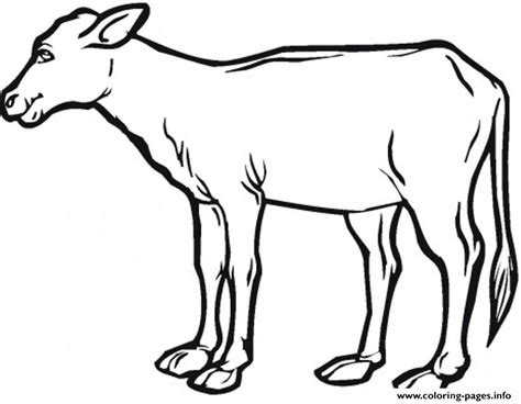 hereford cow coloring page brahman coloring page pages sketch coloring page