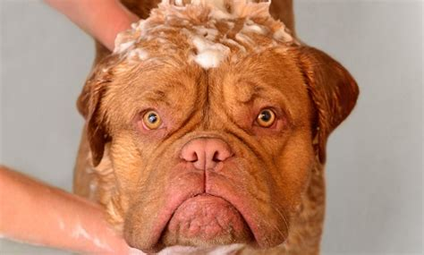 ringworm in dogs images ringworm in dogs vca animal hospital