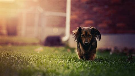 3742 dog hd wallpapers background images wallpaper abyss dog 4k ultra hd wallpaper and background image 3840x2160