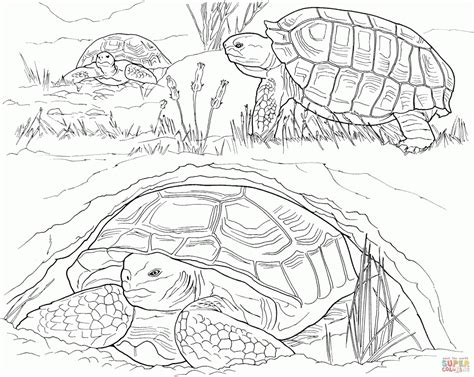 Turtles Laying Eggs Pattern Coloring Page Animal Free Animal Pattern Colouring Pages