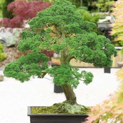 unique indoor plants unique plants and trees