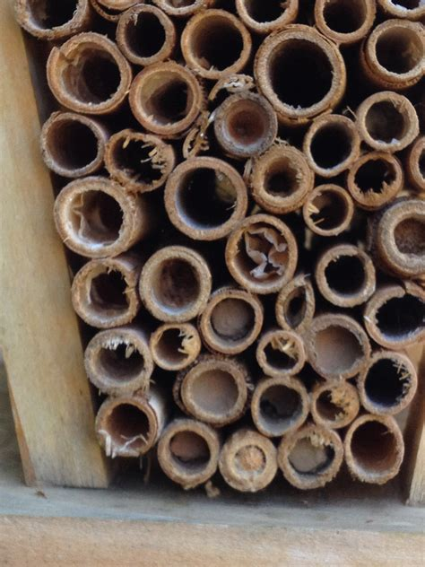 carpenter bee house bee house more on solitary bees
