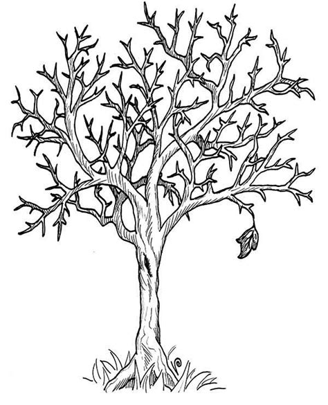 printable fall tree without leaves printable picture of a tree without leaves free coloring
