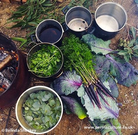 Make Plant - grow make your own dye plants permaculture magazine