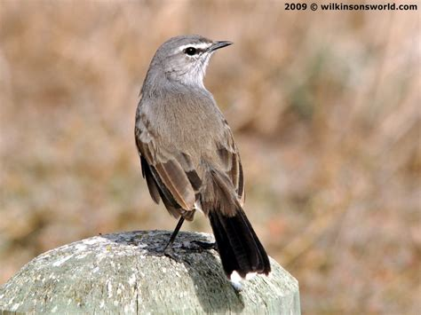 avian l for birds bird photographs h l wilkinson s world