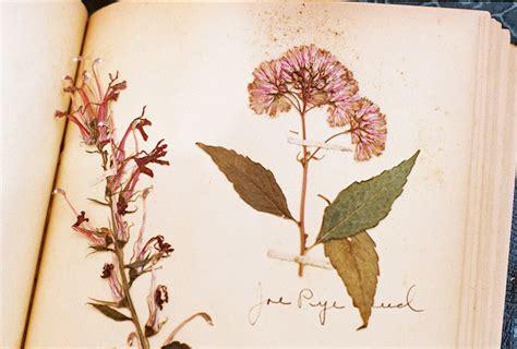 libro el herbario de las monta tu propio herbario diy