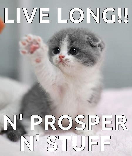 Good Luck Cat Meme - funniest cat memes funny cats