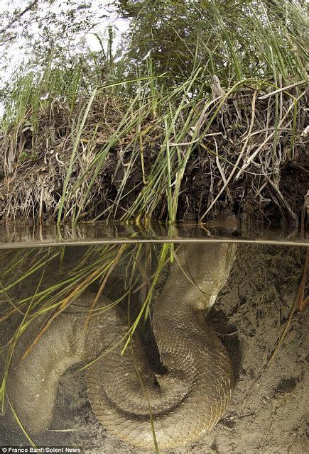 film ular laut asiktau mengejutkan ular raksasa dan terbesar di dunia
