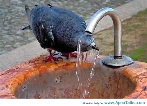 funny picture quotes about hot weather 22 best hot weather images on pinterest funny photos